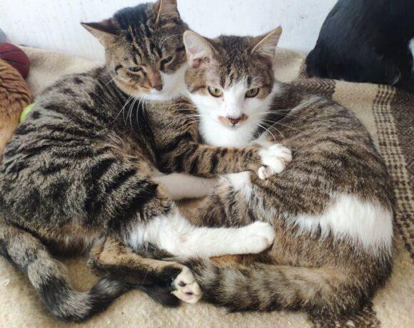 Pate & Shooshi
